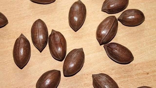 pecan-oil
