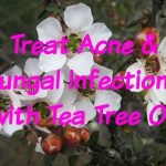 Treat Acne & Fungal Infections with Tea Tree Oil