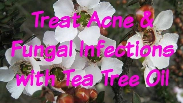 tea-tree-oil-for-skin-hair-beauty