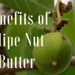 Benefits of Illipe Nut Butter