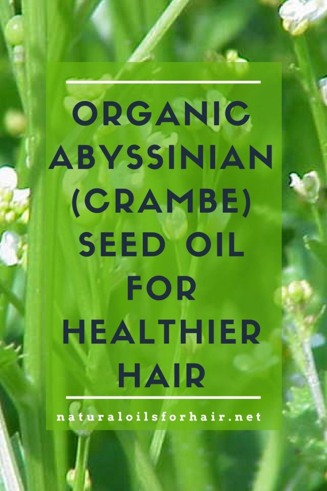 Organic Abyssinian (Crambe) Seed Oil for Healthier Hair