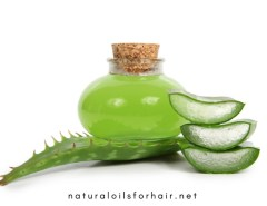 20 Plus Aloe Vera Gel Products for Healthy Hair Care and Growth