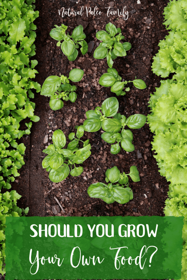 When you buy food already made, or go out to dinner at a restaurant, there is truly no way to know what is in it. In order to remedy that, deciding to grow your own food gives you control over knowing where your food comes from, which allows you to focus on eating nutrient-dense, fresh food.