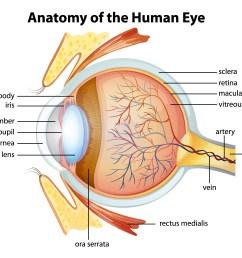 human eye anatomy [ 6006 x 4454 Pixel ]