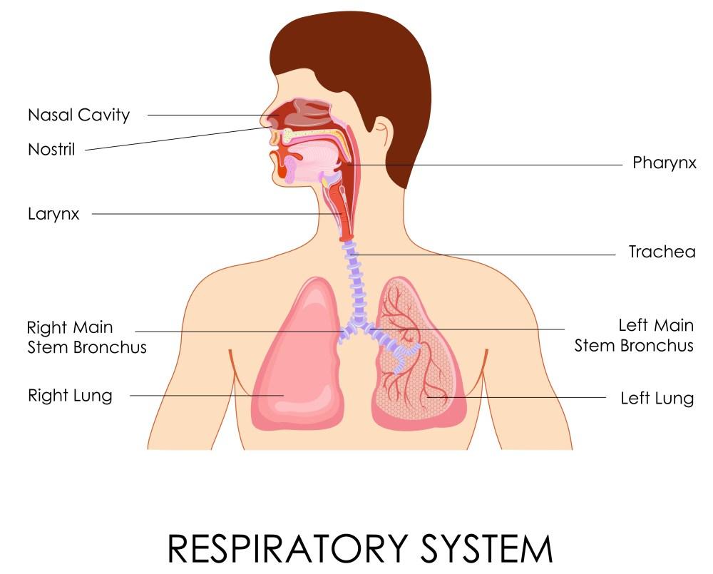medium resolution of chest congestion