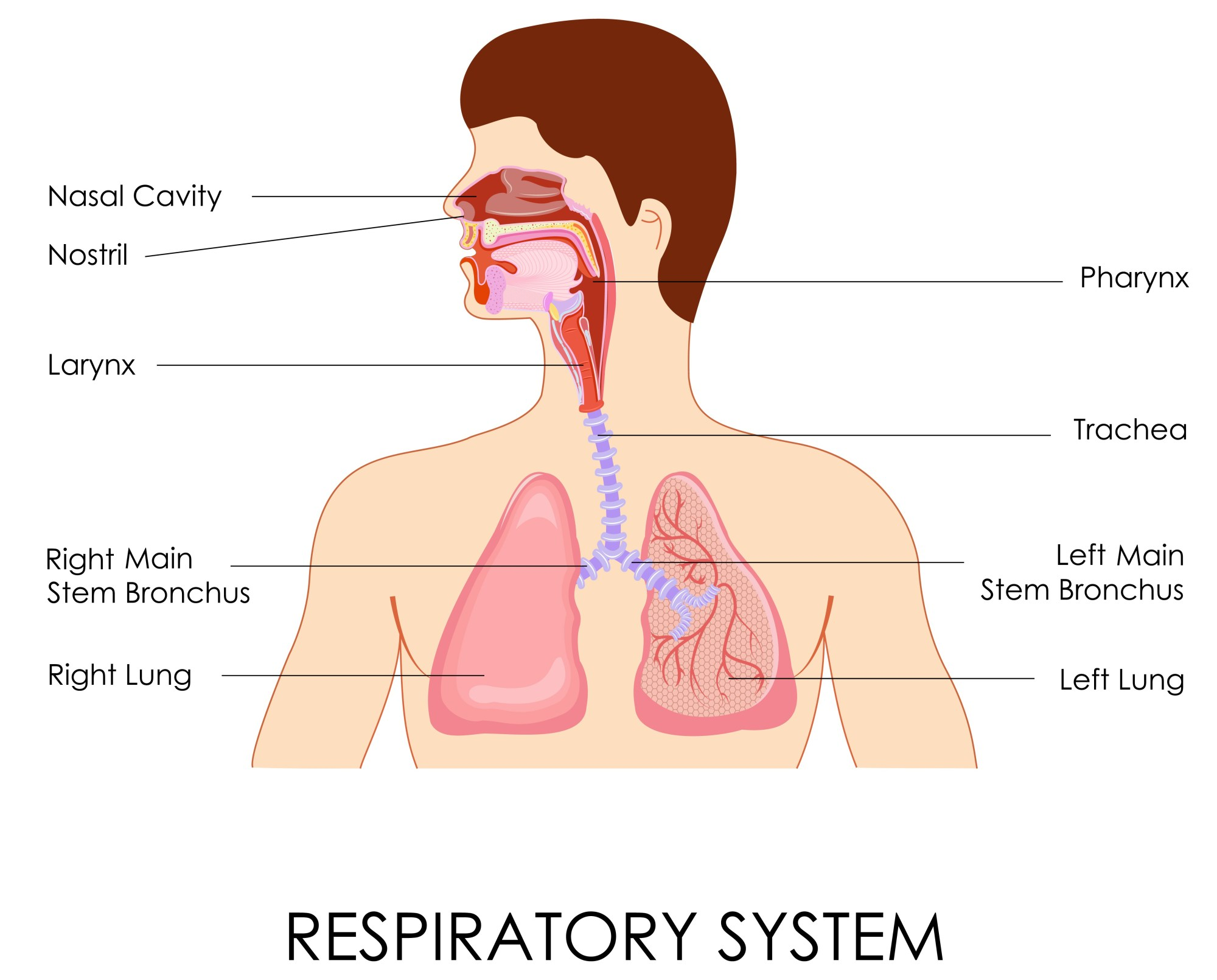 hight resolution of chest congestion