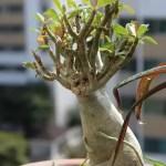 Ginseng Health Benefits-1