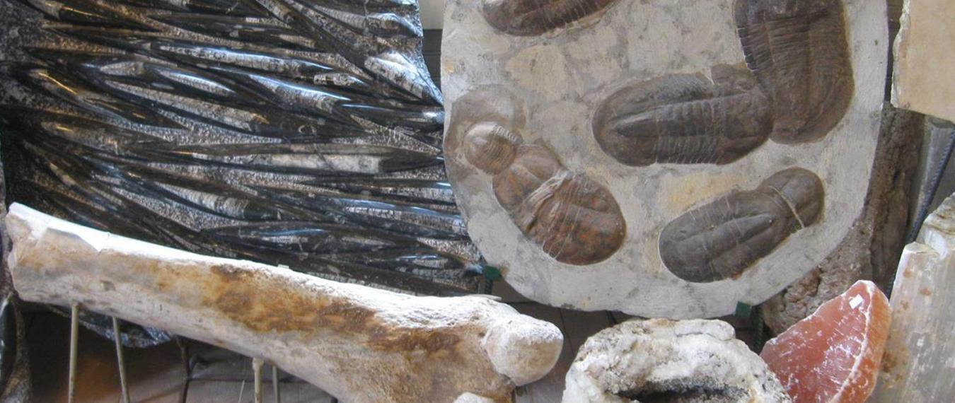 Unique Fossils