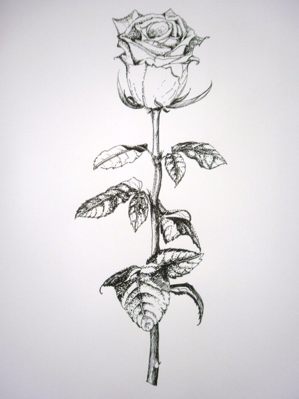 20 Black And White Outline Of Flowers With Stems Pictures And Ideas