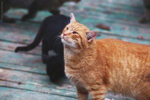 Zoocat