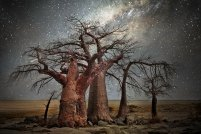 ancient-oldest-trees-starlight-photography-beth-moon-7