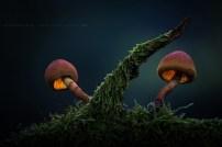 Le monde magique des champignons par Martin Pfister