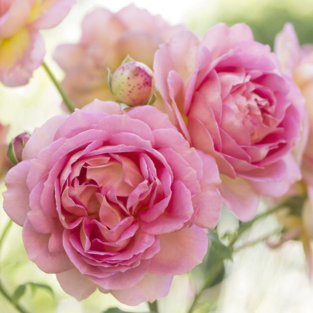 Nature to Print Blumenbilder auf Leinwand Fototapete  Kissen