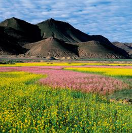 Flowers blooming in the valley, Tibetan Plateau, Tibet, China