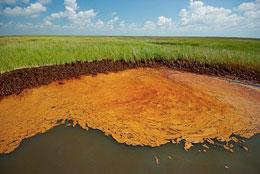 Hydrocarbons from oil spills - such as those washed up in Barataria Bay, Louisiana - can remain in marsh sediments for years, potentially having long-term effects on fish embryos.