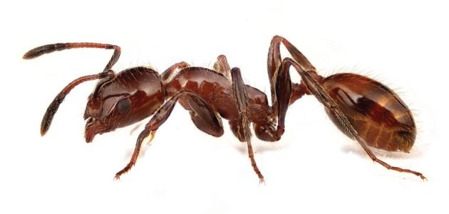 Beautiful Pest Control Ideas Ant Killer Borax Organic Garden Tips Bayer Full Size