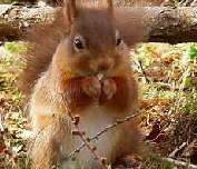 Over 400 red squirrels were counted in the survey