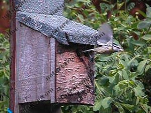 Adding a bird box to your garden our yard is best done at this time of year