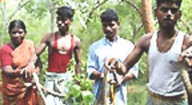 Hantavirus strikes India - Nature India