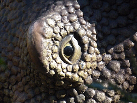 styracosaurus340665_s
