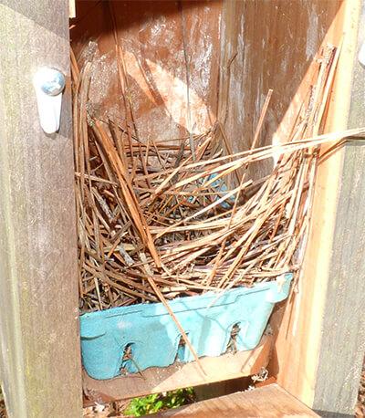 The Woodland nest.