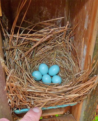 Woodland nest (4/12/16).