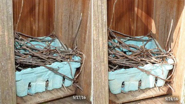 Sailboat Pond nest showing no changes since last week (5/24/16).