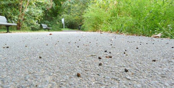 Frass, or caterpillar poop.
