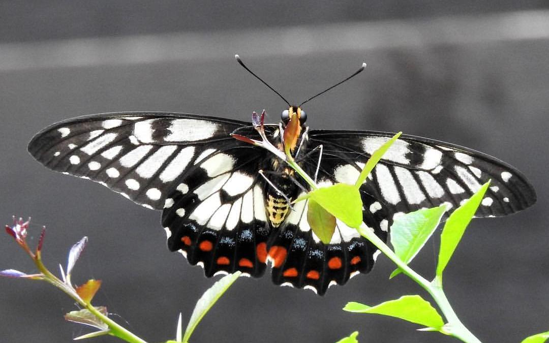 Butterfly: Spirit of Transformation – in practice