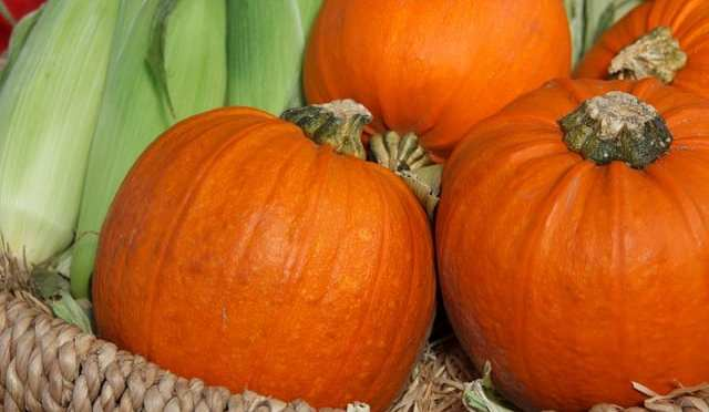 26th Annual Halloween Harvest Fest to be Held 10/21-22 at Hernando County Fairgrounds