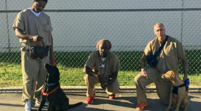 Teaching Old and Young Dogs New Tricks with Citrus County Inmates