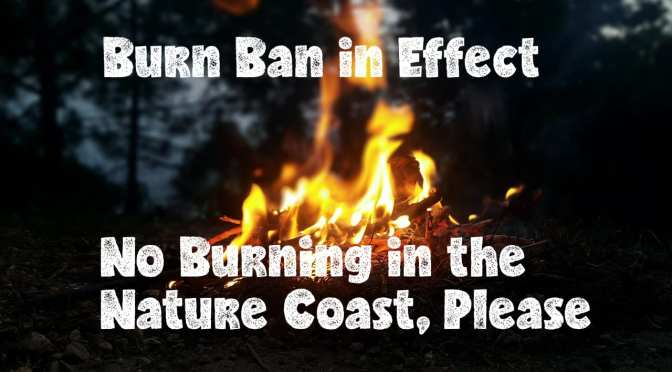 Burn Ban Issued for Pasco County