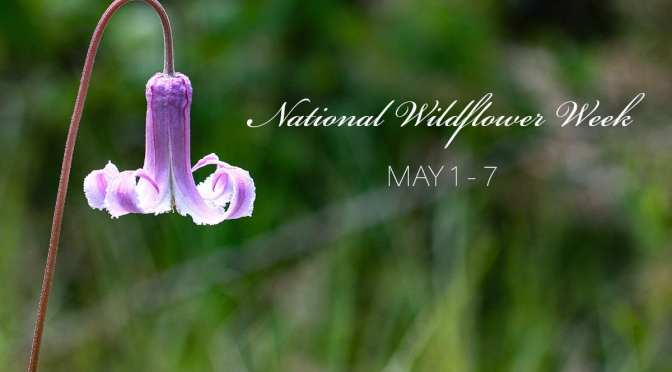 Celebrate National Wildflower Week with a Photo Walk 5/6