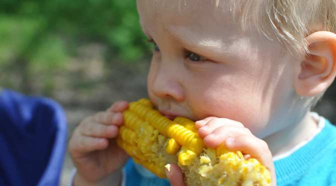 JG Ranch May Update: Sweet Corn, Berries & More
