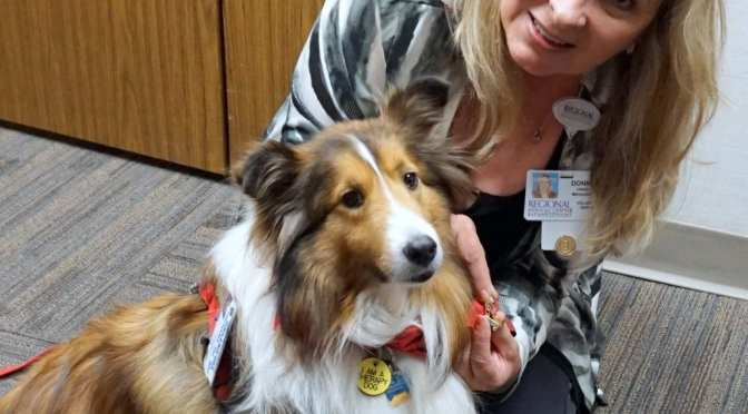 Pet Therapy Dog Receives 500 Hour Volunteer Pin  at Regional Medical Center Bayonet Point!