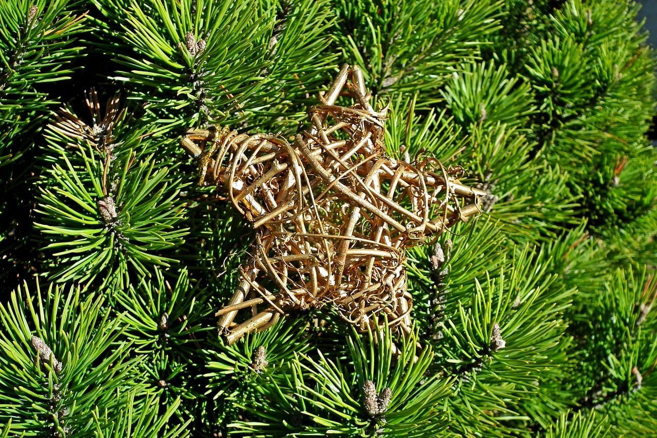 Christmas Tree Recycling Available in Pasco County
