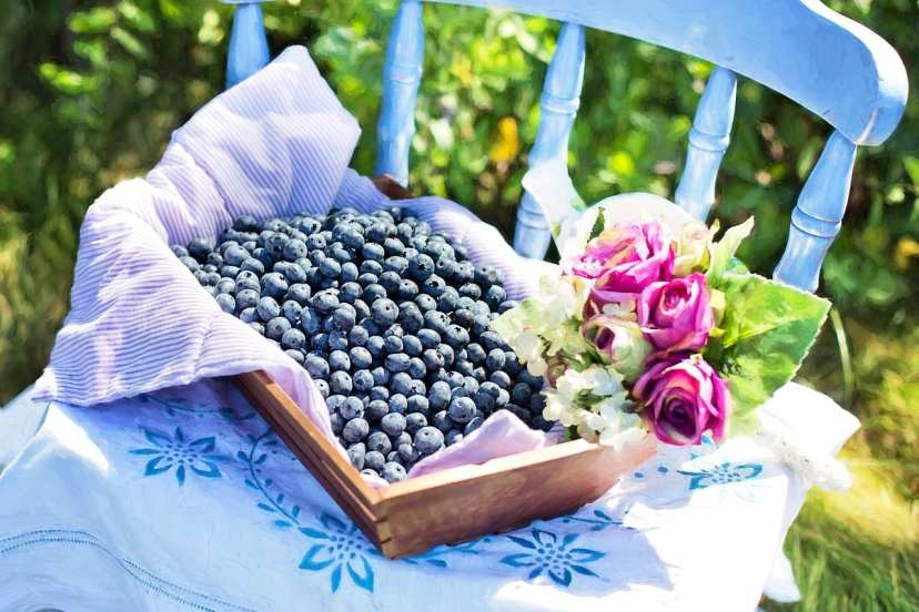 blueberries in a bowl on a chair