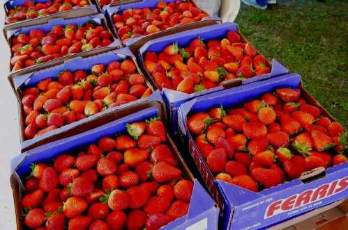 Floral City Strawberry Festival 2020 Festival Events : NatureCoaster.com