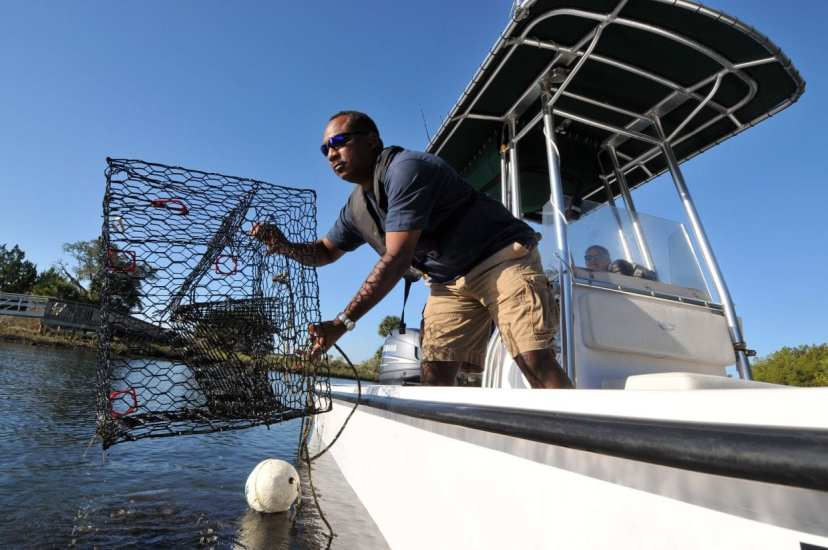 fwc blue crab trap removal