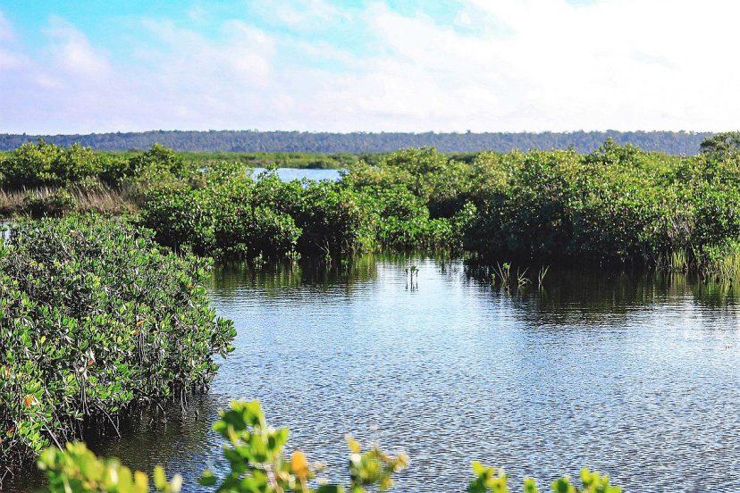 nature coast estuary
