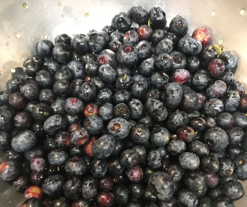 freshly picked blueberries washed