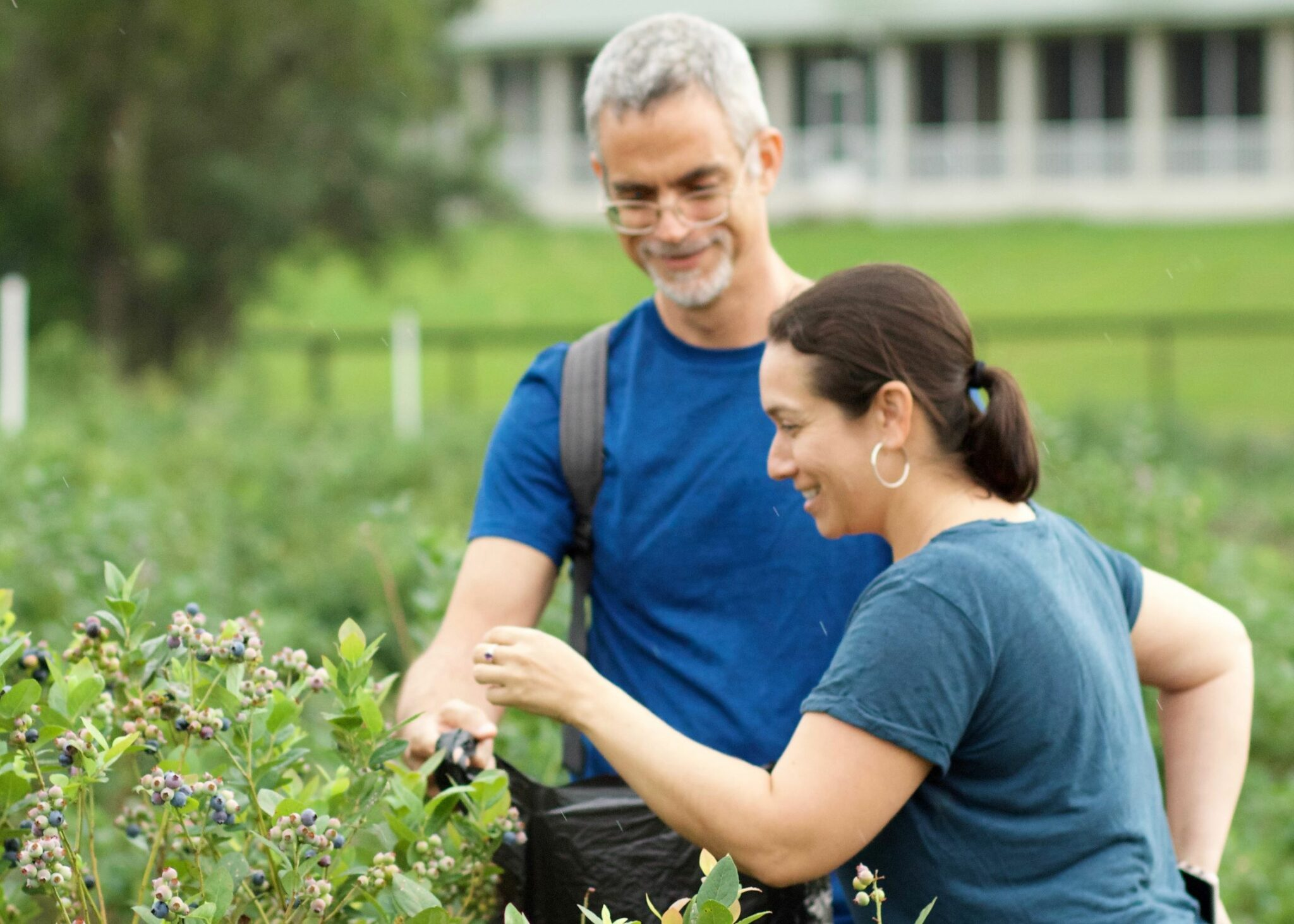 couple picking blueberries