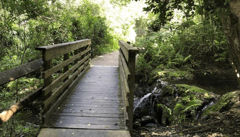 rainbow springs footbridge