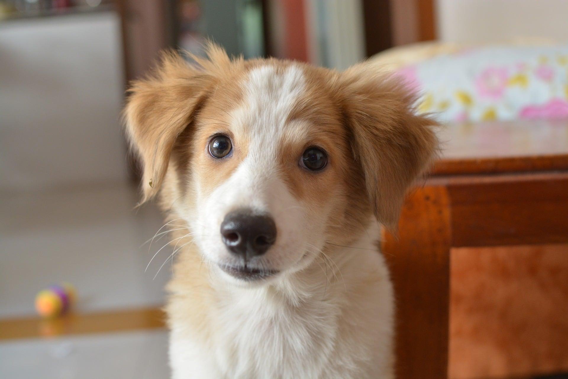 a quel ge commencer l 39 ducation d 39 un chien nature de chien. Black Bedroom Furniture Sets. Home Design Ideas