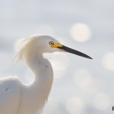 Comme promis vous pouvez voir 12 nouvelles photos d'oiseaux de Colombie dans la galerie Vie animale.