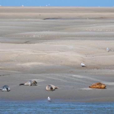 Vacanciers du mois d'août, profitez des spectacles de la Côte d'Opale !