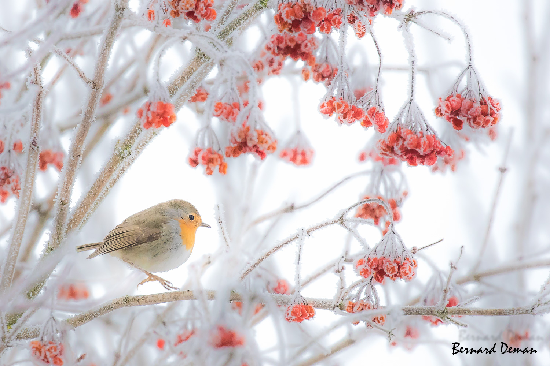 Deuxième chute de neige et donc… deuxième série de photos dans des paysages envoutants!!!