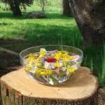 découvrir les plantes sauvages médicinales et comestibles