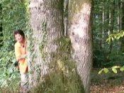 La voie des arbres : formation en ligne