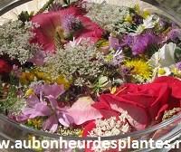 Le pouvoir des fleurs et des elixirs floraux